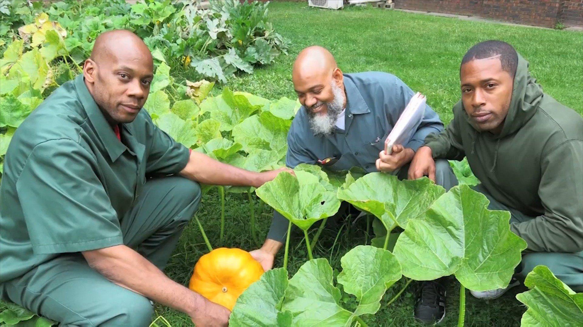 Will plant-based prison diet improve inmate behavior?