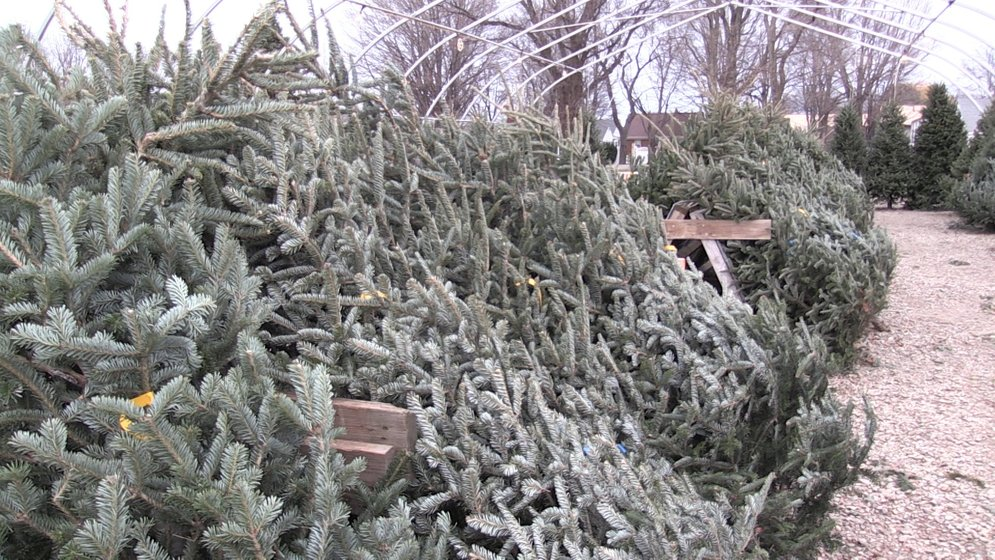 Tips to keep your Christmas tree alive and safe - Erie News Now ...