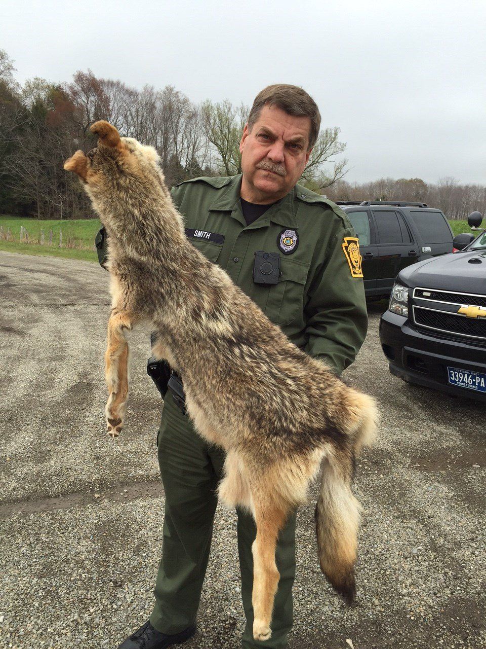 Deadly Coyote Attack On Millcreek Dog Prompts More