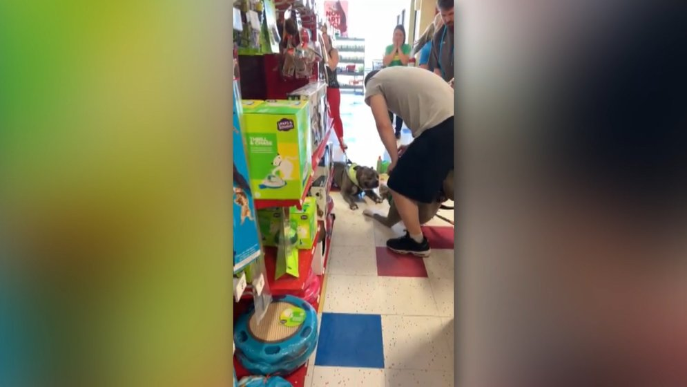 Viral Video Shows Two Dogs Fighting at a Petco in Erie