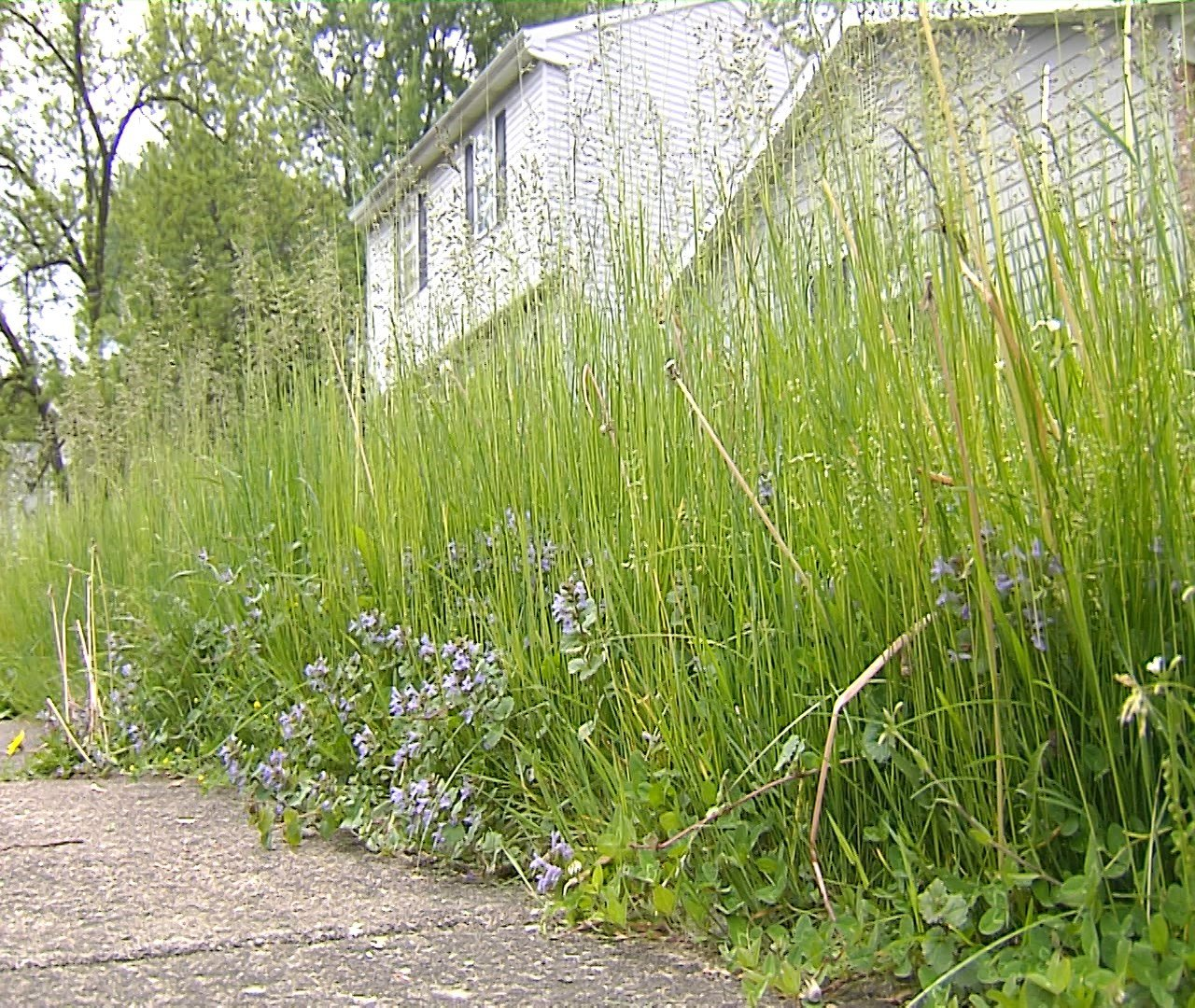 Overgrown Grass Frustrates Erie Neighbors Erie News Now Wicu And Wsee In Erie Pa